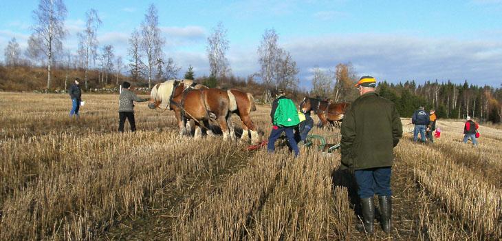 Distriktsmästerskap i hästplöjning. 3 ekipage var anmälda till tävlingen, 2 från Västra Götaland och 1 från Halland. De tävlade i var sin region. Så Hallänningen var redan från start garanterad en första plats. Västra Götalänningarna bestod av Bruno & Linus Elmelid, så här var det en tuff kamp mellan far och son som resulterade i Linus 1:a och Bruno 2:a.